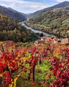 Vineyards overlooking the Miño River